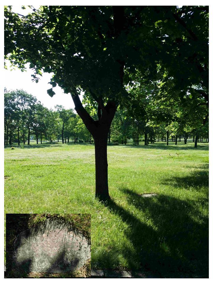 Drvo koje je zasadila Indira Gandi