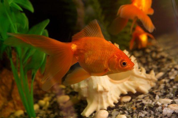 Šta raditi u Beogradu ove nedelje - akvarijum i tropikarujum