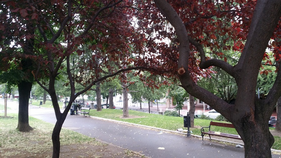 Trees and Beches Students Park Belgrade
