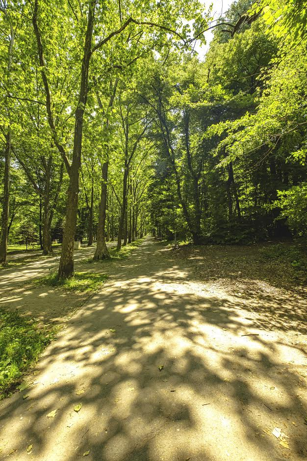treaded paths Hyde Park Belgrade