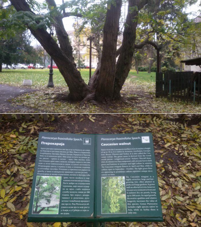 zasticena stabla u zemunskom parku